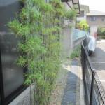竹の剪定??