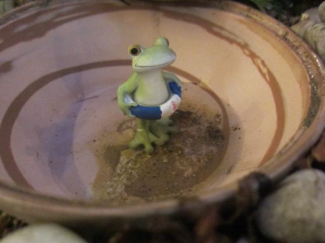 器の中のカエル