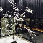 わんこで雪だるま 陶器で目玉