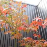 一穂窯庭園の紅葉