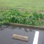 台風が過ぎた後