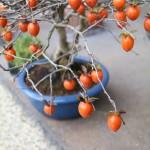 花澤明春園 出張一穂窯陶芸教室 冬の景色