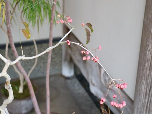 盆栽 陶芸 (14)